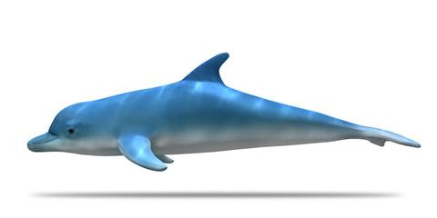 Fotoğraf Ve Video Arayın Yunus Balığı