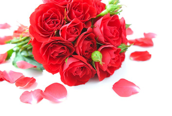 Red roses and petals on white background