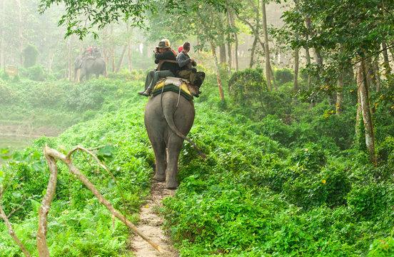Elephant safari in chitwan forest Nepal