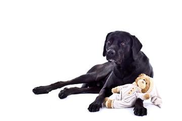 Hund mit einen Teddybaer