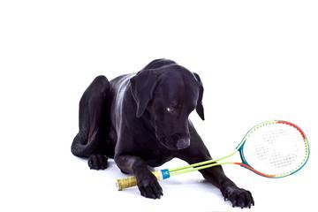 Hund mit Sqasch Schläger