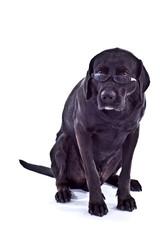 Hund mit Sehschwäche