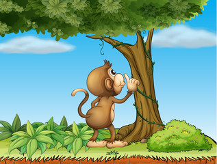 A monkey watching a tree