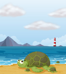 A turtle in the shore