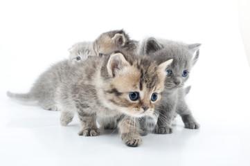 Studio shot  of little kittens isolated over white