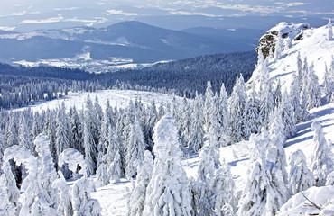 Wall Mural - Winterlandschaft am grossen Arber, Bayerischer Wald