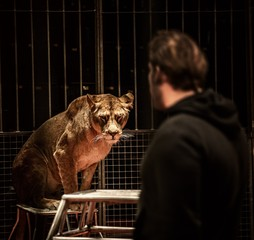 Tamer and lioness on circus arena