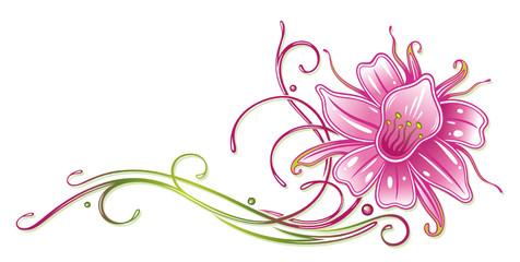 Orchidee, Ranke, flora, Blume, Blüte, bunt