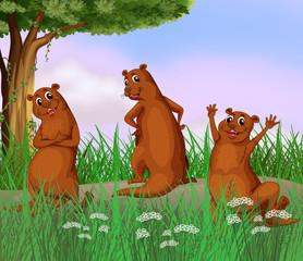 Three wild animals at the road