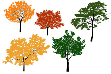 five color trees isolated on white