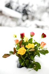 Valentinstag 03