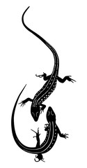 animal lizard isolated on a white background vector