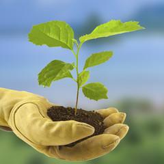 concept protection de la nature, main gantée, arbre