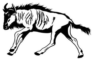 wildebeest black white