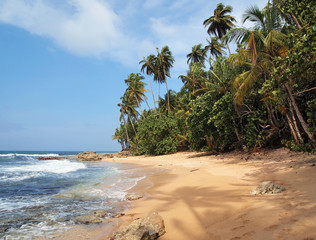 Unspoiled beach with lush vegetation