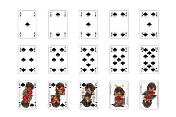 Spielkarten - Pick mit Hundebilder