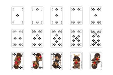 Spielkarten - Kreuz mit Hundebilder
