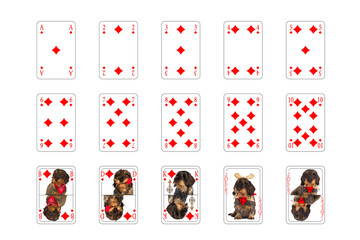 Spielkarten - Karo mit Hundebilder