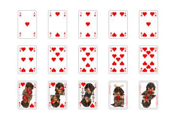 Spielkarten - Herz mit Hundebilder