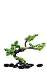 Small tree in traditional Japanese style bonsai.