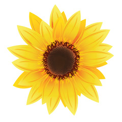 sunflower in vector