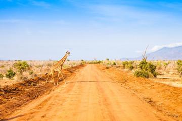 Fotoväggar - Free Giraffe in Kenya
