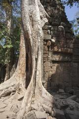 Ta Phrom. Siem Reap. Cambodia
