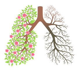 Lungs. Effect after smoking and disease.