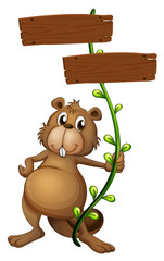 A beaver holding a vine plant with signboards