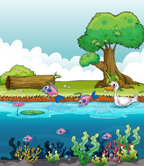 Wall Murals River, lake Sea creatures with a duck