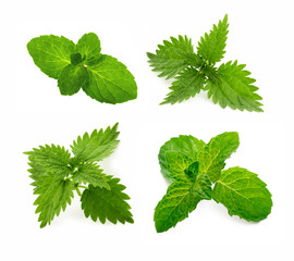 Mint and nettle