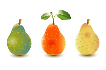 Three Pears with Leafs