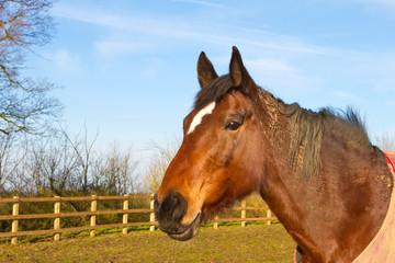 Horse in field wearing horse rug