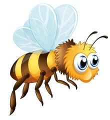 A big bee