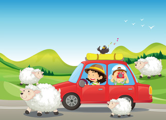 Foto op Canvas Boerderij The red car and the sheeps at the road