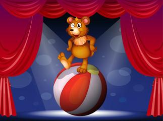 Keuken foto achterwand Beren A bear at the circus