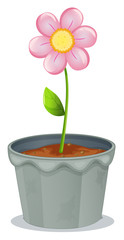 A pot of plant with a flower