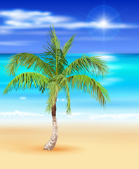 tropical beach - vector illustration of the palm tree