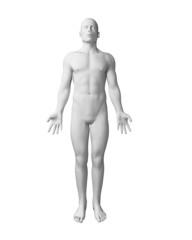 3d rendered illustration - white male body