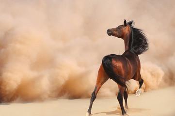 Purebred Arabian Horse in Desert Storm