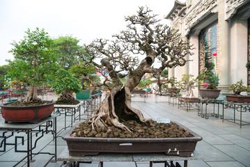 bonsai exhibition