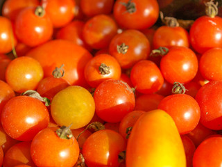 Tomatoes picture
