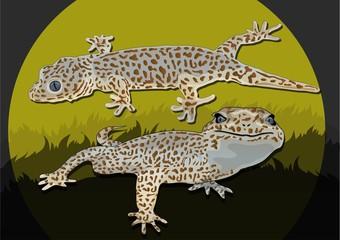 geckos in the evening