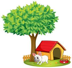 Foto auf Leinwand Hunde A white dog