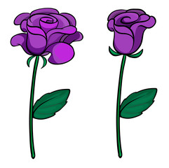Two purple roses