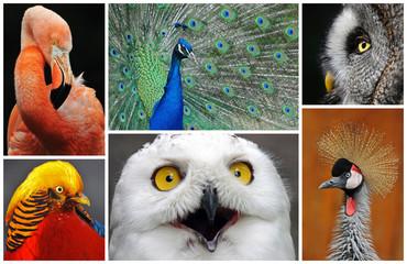Vogel Collage