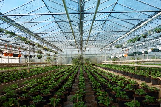 Grande serre horticulture