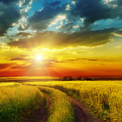 Canvas Prints Honey sunset over rural road near green field