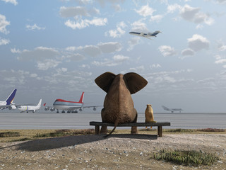 Fototapete - elephant and dog sitting at the airport