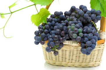 ripe grapes in a basket on a white background